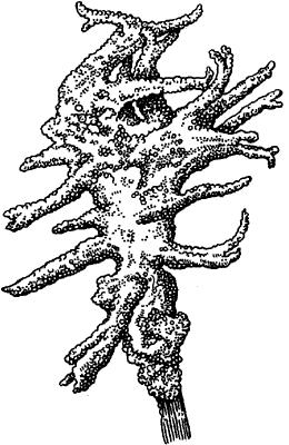 Картинка губка бадяга